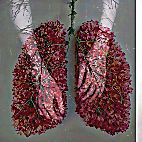 breathing nature hands flowers lungs mash up mauricio mar