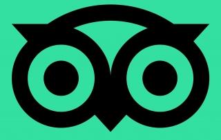 tripadvisor logo icon black green owl square